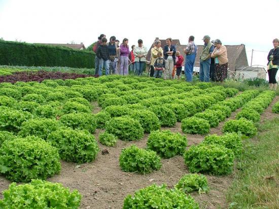 Visite du grand jardin du maraîcher P.Noblet à Larnaud (Jura) le 1er juin 2009.