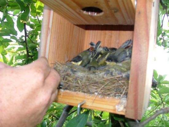 Aux Vergers de Sellières (Jura), le produit de traitement contre les chenilles, ce sont les oiseaux !